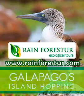 best galapagos tours - galapagos island hopping tours - ecuador adventure travel - galapagos island cruise cost - amazon jungle ecuador - Private Daily tours from Quito
