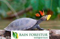 rainforestur-ecuador-adventure-travel