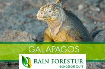 rainforestur-travel-agency-galapagos